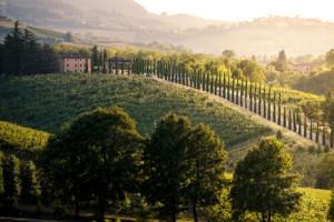 Castelvetro di Modena hills