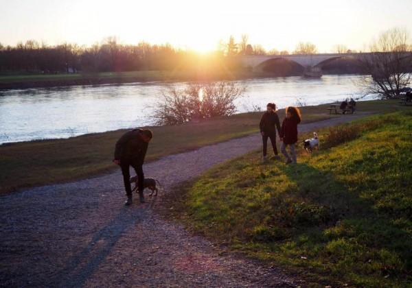 犬の散歩をする人々