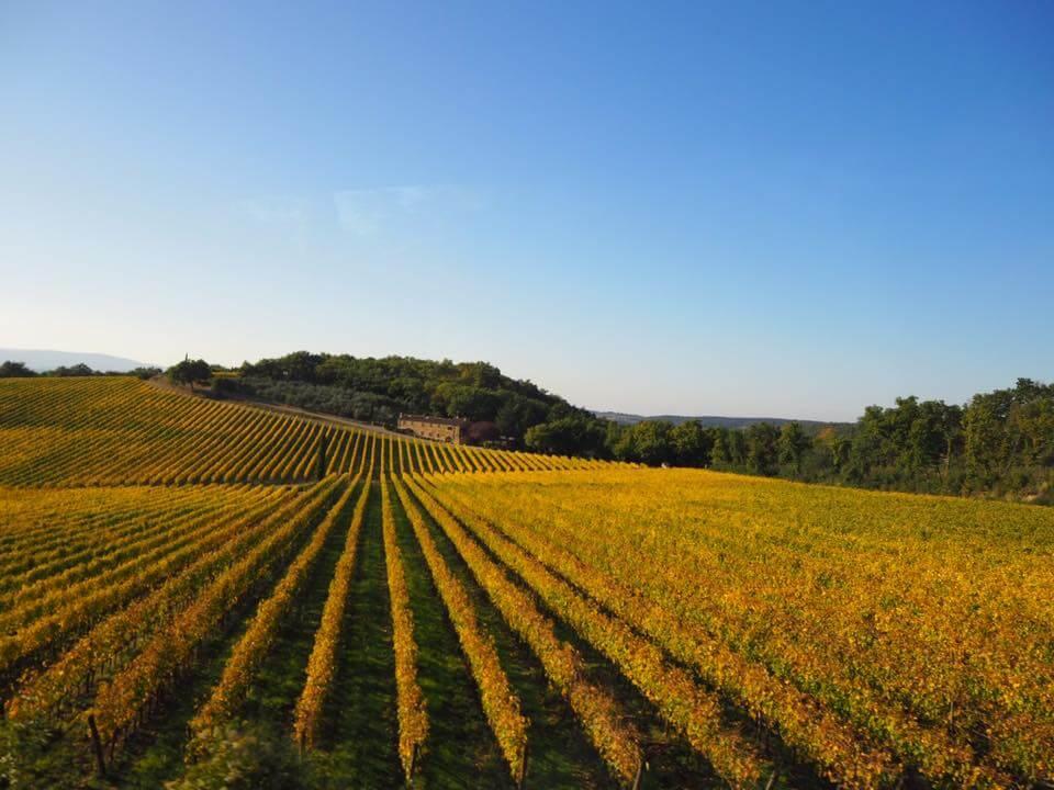 トスカーナ地方キャンティのワイン畑